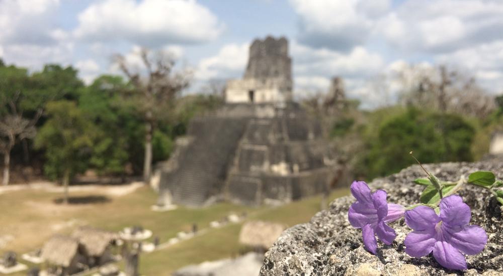 gran plaza tikal guatemala templo serpiente bicefala