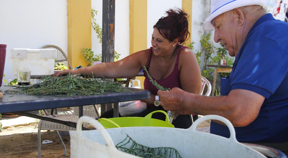 Experiencia gastronómica en Cádiz. Limpiando salicornia
